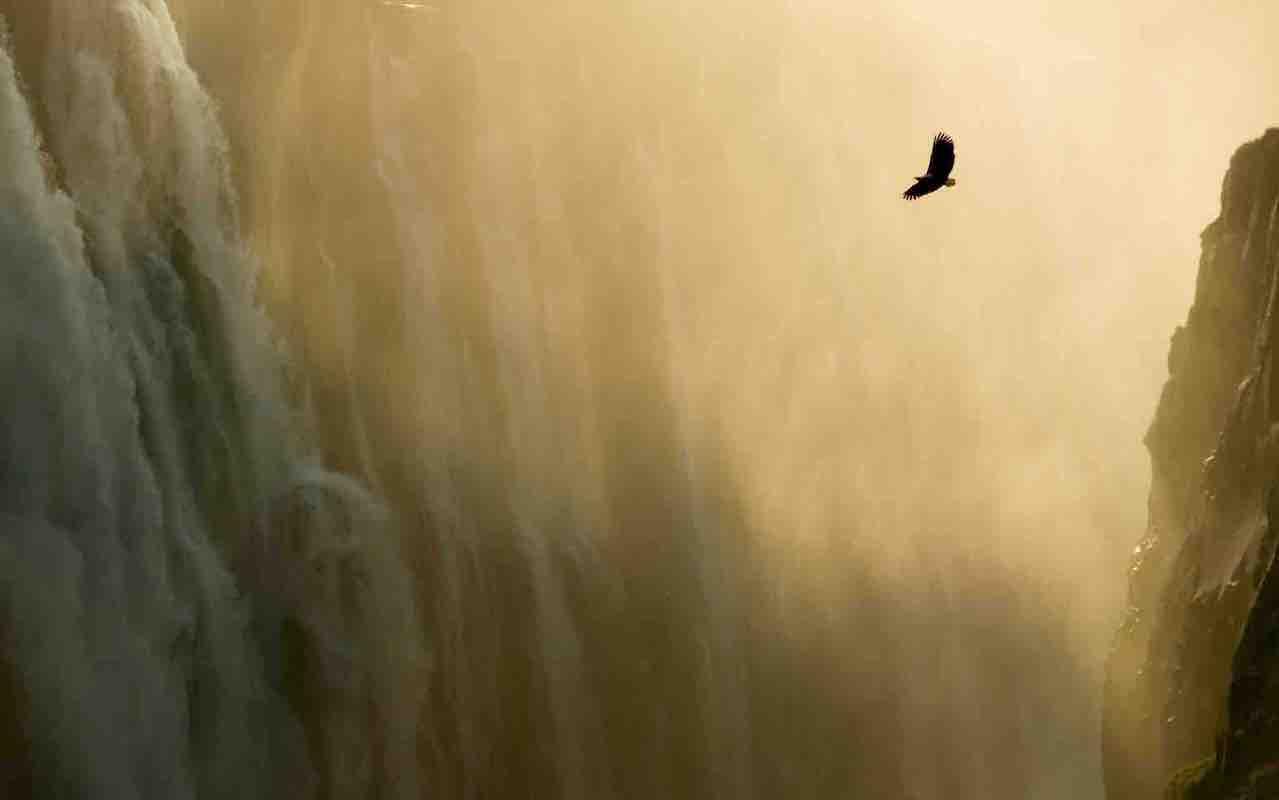 eagle flying near a waterfall