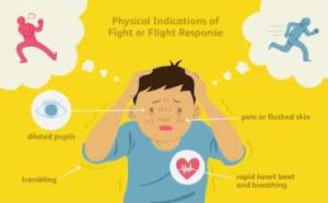 physical signs of a fight-flight response
