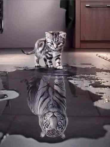 kiddle reflecting in the puddle like a tiger